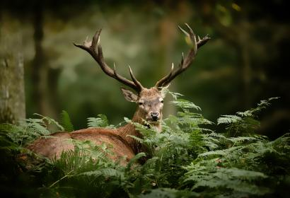 """Deer Rut"" Weekend in Fourneau Saint-Michel"